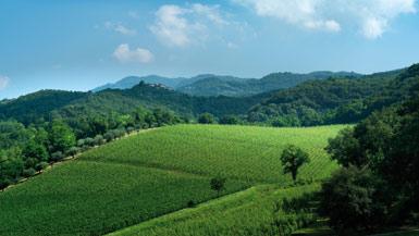 Weinberge von Bertani - Ausgesuchte Lagen in den wichtigsten DOC/DOCG Gebieten des Veneto