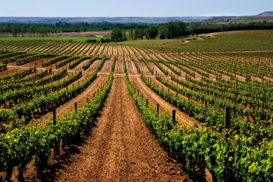 Die Weine von PradoRey werden auf dem Landgut Real Sitio de Ventosilla erzeugt.